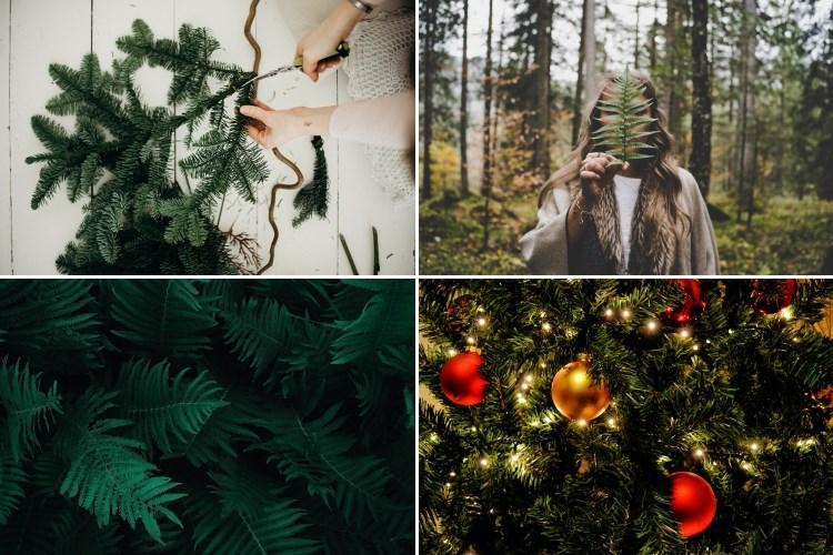 Br24 Blog 4 Farbtrends für das Weihnachtsgeschäft 2020: Beispielbilder für den Farbtrend natürliche Grüntöne