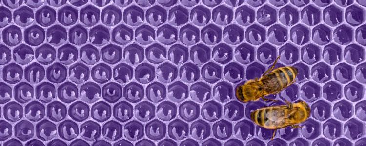 Pantone Farbe des Jahres: Ultra Violet