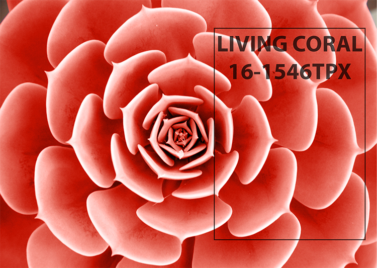 Br24 Blog Pantone Color of the Year 2019: Close up petals of a rose in the color Living Coral by Pantone