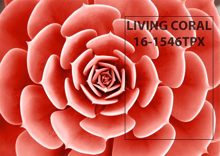 Br24 Blog Pantone Farbe des Jahres 2019 Living Coral: Nahaufnahme Blätter Sukulente Pflanze in der Farbe Living Coral von Pantone