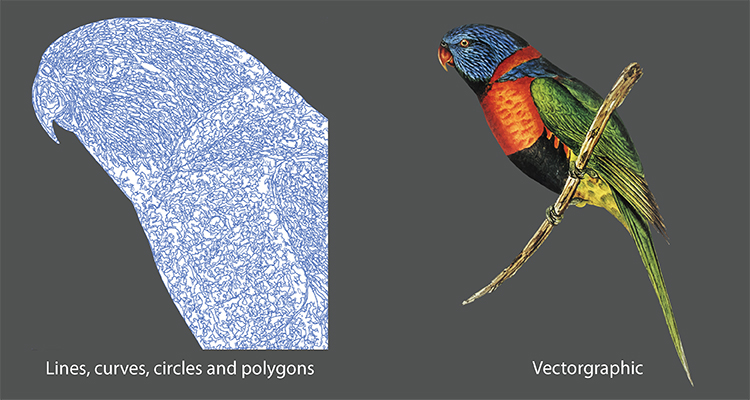 Br24 Blog Raster vs Vector: What is the difference? Image of a budgie as a vector graphic, showing lines, curves and polygons