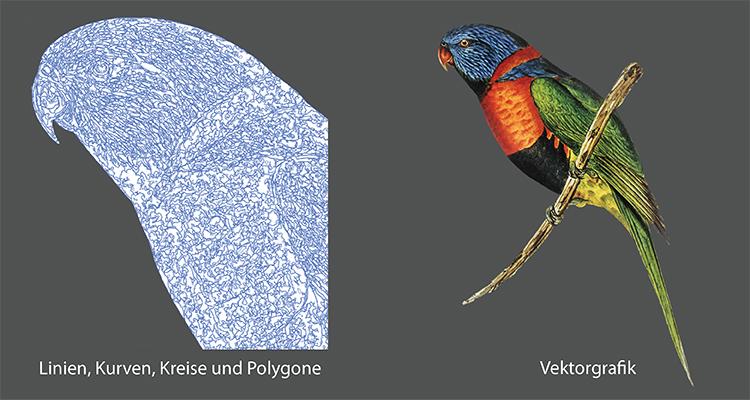 Br24 Blog Raster vs Vektor: Was ist der Unterschied? Bild eines Wellensittichs als Vektorgrafik, zeigt Linine, Kurven und Polygone