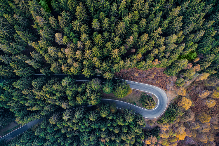 Br24 Blog Visual Trends 2018 Digital and Reality: Aerial view of winding road in green forest