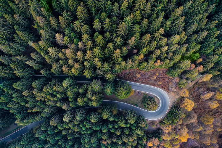 Br24 Blog Visuelle Trends 2018 Digital und Realität: Luftaufnahme kurviger Straße in grünem Wald